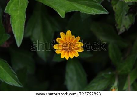 Yellow Flower #723752893
