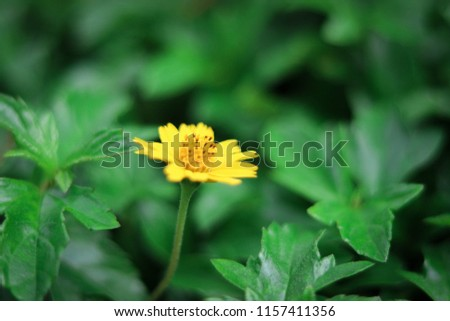 yellow flower background #1157411356