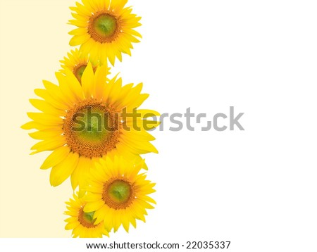 Yellow flower background, suitable for seasonal (summer or spring) designs, plenty of empty / copyspace for text - stock photo
