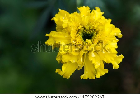 yellow flower blossoms in the garden in the summer, heart-shaped heart #1175209267