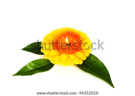 Yellow flower candle isolated on white background.