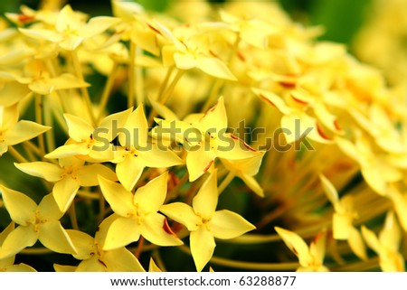 yellow flower close up at day