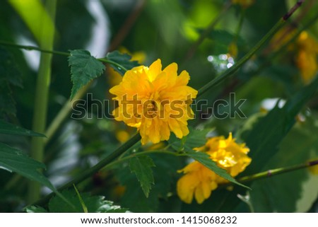 Yellow flower. Different color.  Close up. #1415068232