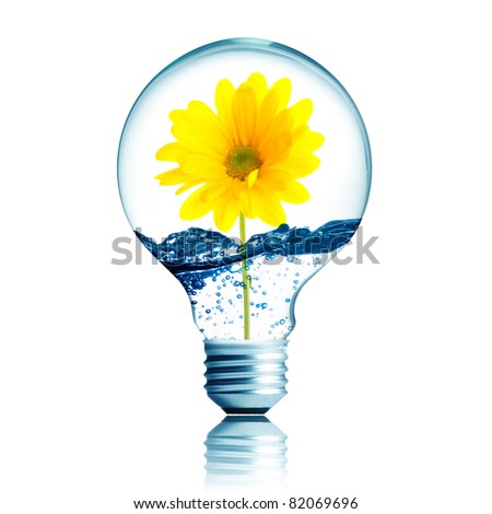 yellow flower growing inside the light bulb fill with water
