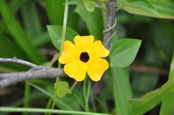 Yellow flower in nature. Yellow flower on green natural background. Yellow flowers. Macro view of yellow flower