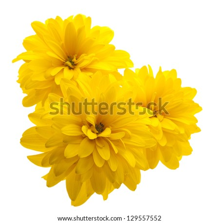 yellow flower isolated on white #129557552