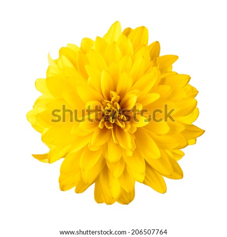 Yellow flower isolated on white background #206507764