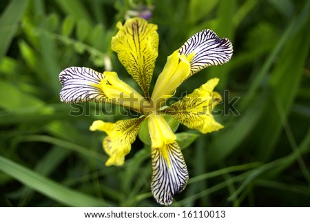 Yellow flower on the meadow