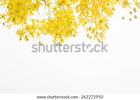 yellow flower  on white background #262272950