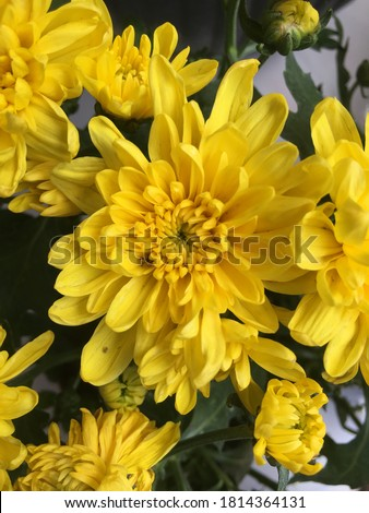 yellow flower pattern, flowers that just bloomed.