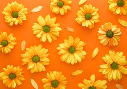 Yellow flower pattern on a orange background. Gerbera spring flowers arranged on a vivid background. Top view. Repetition concept