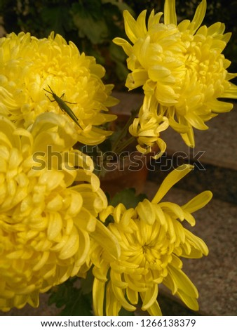 yellow flower pic