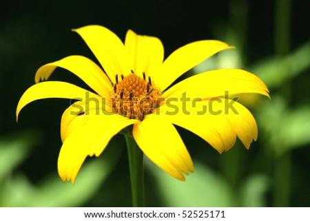 Yellow Flower shot taken in Shenandoah National Park