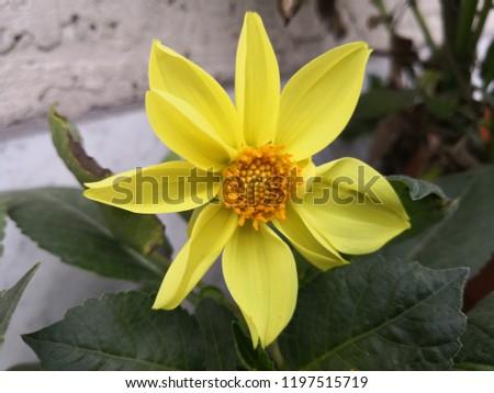 Yellow flower / żółty kwiat Zdjęcia stock ©