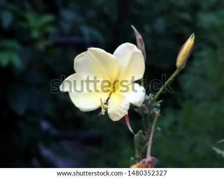 yellow flower, wild flower, flower, flower bloom