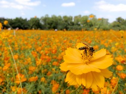 yellow flower with bee in flower field
