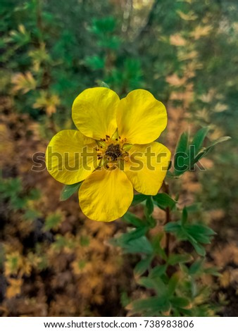 Free photos yellow flower 5 petals avopix yellow flower with five petals in montana 738983806 mightylinksfo