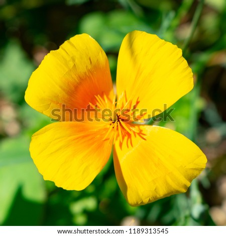 Free photos yellow flower with 4 petals avopix yellow flower with four petals close up 1189313545 mightylinksfo