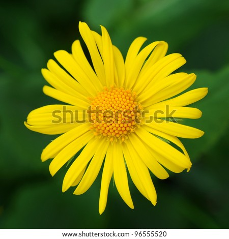 yellow green flower logo - photo #45