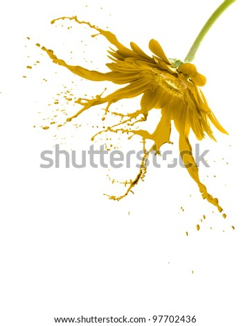 yellow flower with paint splash on white isolated background