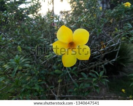 Yellow flower with plants on the background #1340647541
