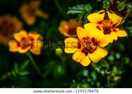 Free photos yellow flower with red center on a white background yellow flower with red center 1195578478 mightylinksfo