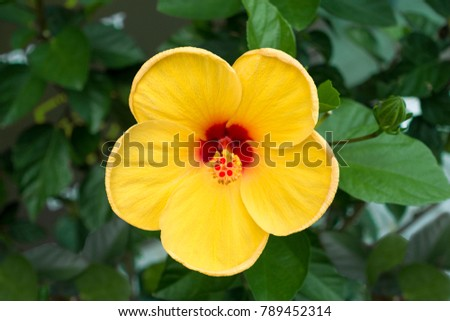 Free photos yellow flower with red center on a white background yellow flower with red center 789452314 mightylinksfo