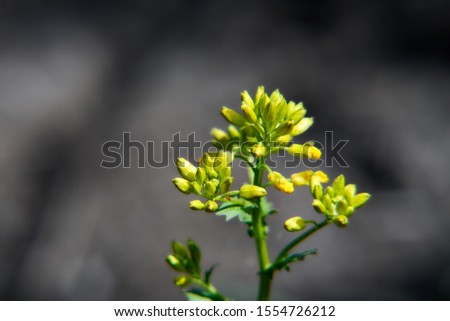 Yellow flower with smooth background       Stock fotó ©