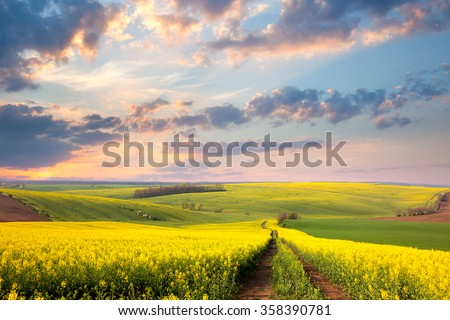 Yellow flowering fields, ground road and beautiful valley, nature spring landscape #358390781
