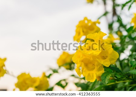 Yellow Flowers #412363555
