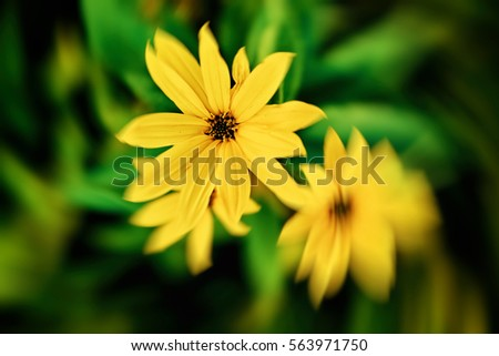 Yellow Flowers #563971750