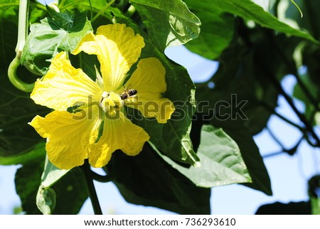 yellow flowers #736293610