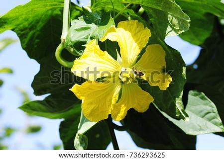 yellow flowers #736293625