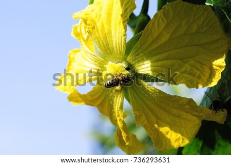 yellow flowers #736293631