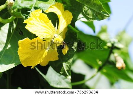 yellow flowers #736293634