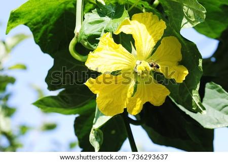 yellow flowers #736293637