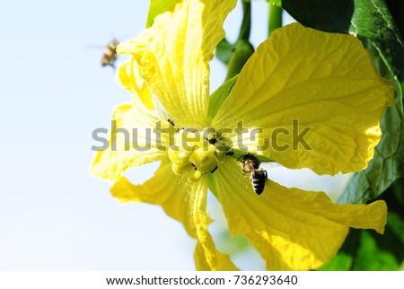 yellow flowers #736293640