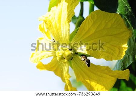 yellow flowers #736293649