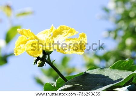 yellow flowers #736293655