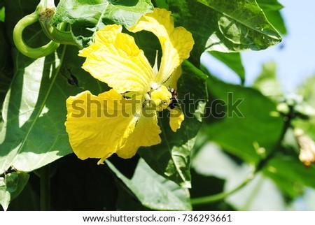 yellow flowers #736293661