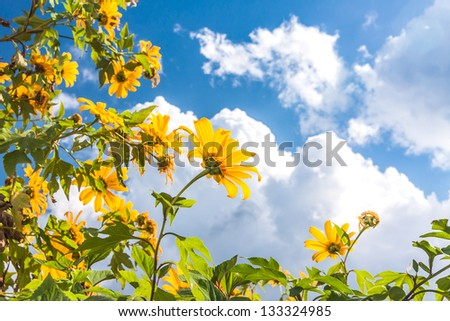 Yellow flowers against blue cloudy sky