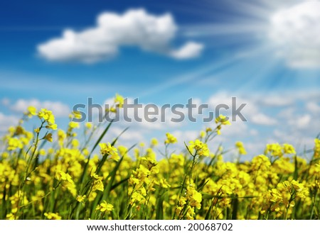 Yellow flowers against blue sky background