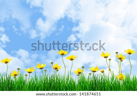Yellow flowers and Green grass against the sky
