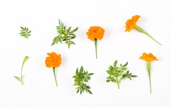 Yellow flowers and green leaves on white background. Tagetes Patula Orange