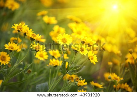 Stock Photo yellow flowers and morning dew