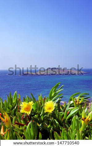 Yellow flowers and pessegueiro island, Portugal