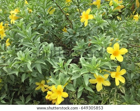Free photos yellow flower 5 petals avopix yellow flowers are blooming in the garden one flower consists of five petals its mightylinksfo