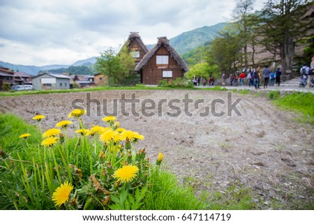 Yellow flowers at Historical Japanese Village with tourist background - Shirakawago in spring, travel landmark of Japan. Use for copy space background vacation #647114719