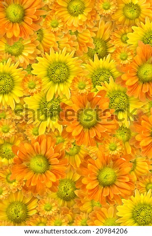 Yellow flowers background