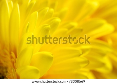 Yellow flowers background, suitable for seasonal (summer or spring) designs, copyspace for text